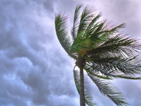 Rack Electric — Palm Tree — Hurricane Season